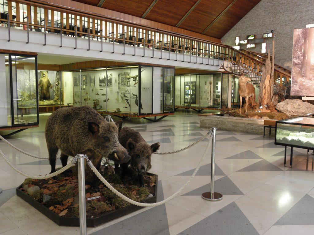 Výsledok vyhľadávania obrázkov pre dopyt Múzeum TANAP-u vTatranskej Lomnici