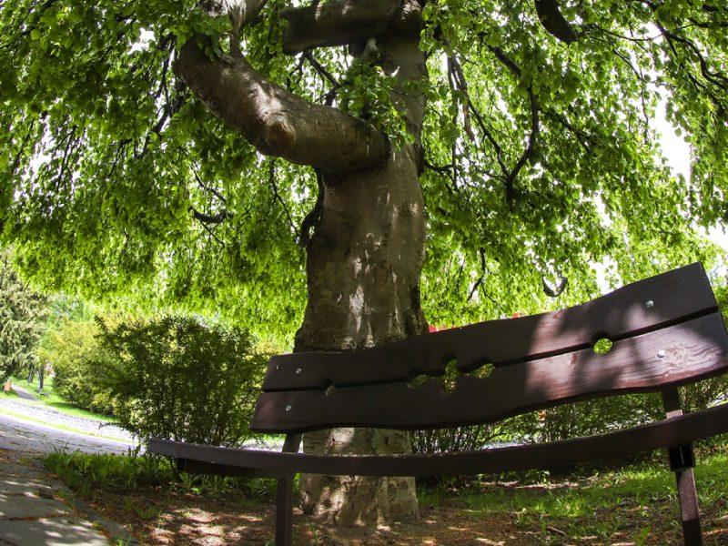 buk-smokovec-strom-roka 2